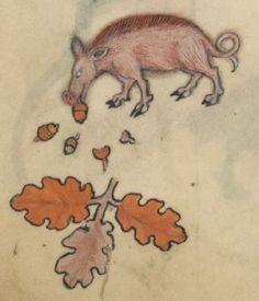 Image result for medieval manuscript piglet
