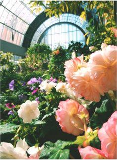 Auckland #Winter #Gardens, #New #Zealand #Wintergarten #Auckland #Gardens #Winter #WinterGardennewzealand #WinterGarden #Zealand #winter garden new zealand Auckland, Garden Leave, New Zealand, Floral Wreath, Plants, Outdoor, Winter Garden, Outdoors, Floral Crown