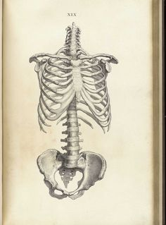 William Cheselden: Osteographia, or The anatomy of the bones (1733)