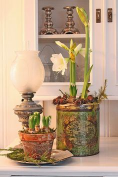 Christmas vignette of white Amaryllis in a vintage rustic green can, small bulbs in an old clay pot on a silver tray and an old lantern
