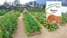 maxresdefault-1-7-1024x576-623x350 Beautiful Gardens, Vineyard, Life Hacks, Flora, Outdoor Structures, Gardening, Plants, Gardens, Vine Yard