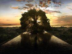 Yggdrasil  Tree Of Life    The Fountain