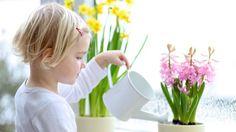 Chcete zachrániť zomierajúce izbové rastlinky? Toto sú NAJ tipy, ktoré ich preberú k životu aj bez chémie | Casprezeny.sk