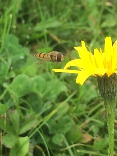 Mid flight Insects, Creatures, Nature, Plants, Animals, Naturaleza, Animales, Animaux, Animal