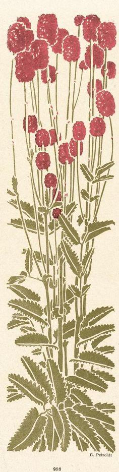Jugend magazine flower ornament by G. Petzoldt, 1918