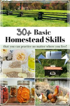 30+ Basic Homestead Skills to Start Learning Today | Faithful Farmwife