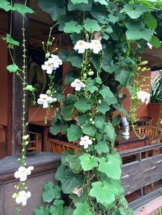 Creative Canvass: Colors of Ubud. Flower vines