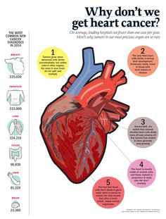 Why we don't get heart cancer. Nursing Notes, Cardiology, Health Matters, Heart Health, Heart Disease, Healthy Tips, No Worries, Helpful Hints