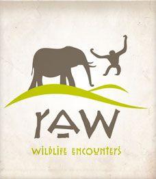 Raw Wildlife Tours- Organgutans
