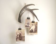 Deer Antler  Wall Hanging / Naturally Shed / 4 Point by gazaboo, $48.00