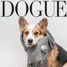 Corgi Edition #Dogue