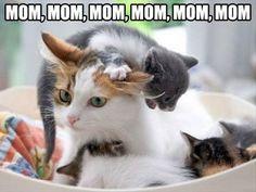 Mama, Mama, Mama, Mama, Mama, Mama