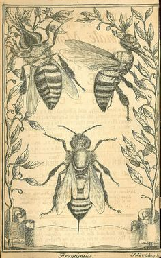 John Thorley Melisselogia. Or, the female monarchy. Being an enquiry into the nature, order, and government of bees, those admirable, instructive and useful insects. 1744.jpg 350×558 pixels