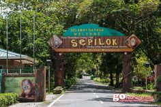 See the Orphaned Orang Utans at the Sandakan Sepilok Orang Utan Rehabilitation Center Tour in Kota Kinabalu, Malaysian... http://gotourister.com/tours/Kota-Kinabalu/Sandakan-Sepilok-Orang-Utan-Rehabilitation-Center-Full-Day-Trip-from-Kota-Kinabalu/51