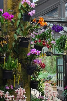 In the orchid room at the Longwood Gardens Conservatory, PA...