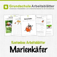 276 best Käfer images on Pinterest in 2018 | Ladybugs, Day care and ...