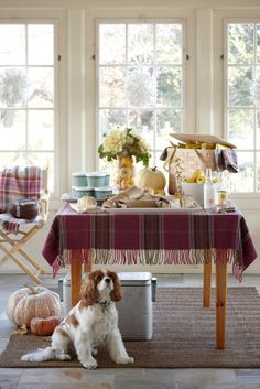 Tailgate party, Better Homes and Gardens feature, Cavalier King Charles Spaniel! Leaves Changing Color, Plaid Tablecloth, Cavalier King Charles, Charles Spaniel, Autumn Inspiration, Better Homes And Gardens, Best Part Of Me, Home Projects, Home Remodeling