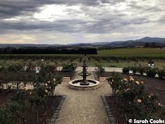 Sarah Cooks: Day Out in the Yarra Valley