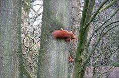 Zwei Eichhörnchen am Baumstamm - Jahreszeiten - Galerie - Community