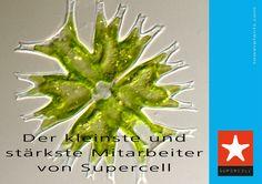 Der kleinste und stärkste Mitarbeiter von Supercell