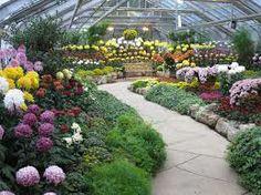 кактуси градина - Google Търсене
