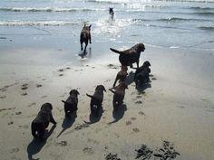 Unos perros de servicio se divierten en la playa con sus cachorros