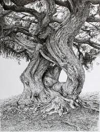 English artist Sarah Woolfenden does amazing drawings of trees and woodland scenes.  Extraordinary!
