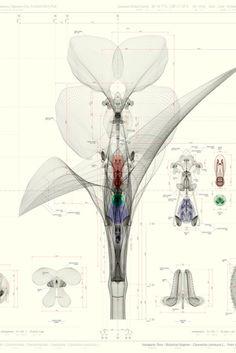 Macoto Murayama – Botanical Blueprints