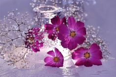 A fun image sharing community. Explore amazing art and photography and share your own visual inspiration! All Things Purple, Shades Of Purple, Purple Flowers, Cosmos Flowers, Flower Power, Flower Arrangements, Beautiful Flowers, Glass Vase, Free