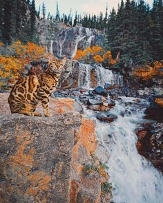Waterfall Wednesday 💦🐈