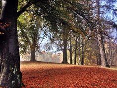 Meraviglioso autunno