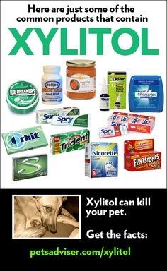 Xylitol Poisoning in Pets: Know the Facts | Pet Adviser