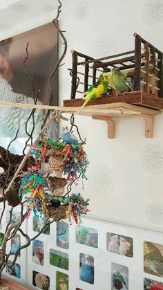 Budgerigars play in the bird room, The bird cage is equally a house for the birds and a decorative tool. You can select what you may need among the bird cage types and get far more specific images. Cockatiel Toys, Parakeet Toys, Parakeet Cage, Budgies, Parrots, Diy Parrot Toys, Diy Bird Toys, Diy Budgie Toys, Animal Room