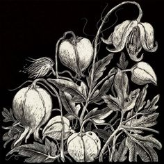 A set of cards includes 1 Clematis 1 Poppy 1 Hellebore Scraperboard images on white cards with white envelope in cello bag 135 x square Black White Art, Black And White Drawing, Black And White Illustration, Art Scratchboard, Art Carte, Scratch Art, Square Card, Sgraffito, Owl Art