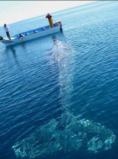 whale sighting, this would freak me out if i was in their boat!