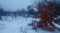 Winter wonderland. Latvia