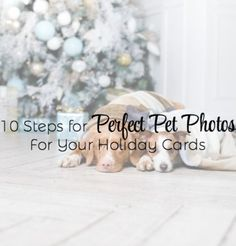Perfect Pet Photos for Your Holiday Cards