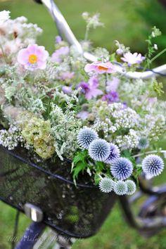 .wild flowers..