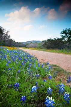 Road Less Taken By Vertical - Llano County, TX