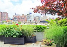 Soho Terrace Deck: Roof Garden, Container Plants, Maple, Grasses, Fiberglass - Contemporary - Deck - New York - Amber Freda NYC Garden Desig...