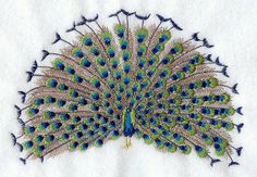 Peacock on Display  - Embroidered Decorative Linen Kitchen Towel or Absorbent White Cotton Flour Sack Towel on Etsy, $21.99