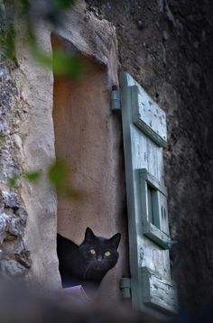 For a black caturday Crazy Cat Lady, Crazy Cats, Cute Cats, Funny Cats, Animals And Pets, Cute Animals, Clumping Cat Litter, Cat Window, Curious Cat