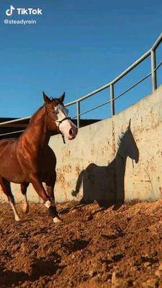 Pretty Horses, Horse Love, Beautiful Horses, Funny Horse Videos, Funny Horses, Reining Horses, Appaloosa Horses, Cavalo Wallpaper, Horse Markings