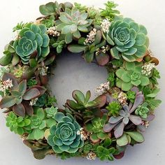 "Corona navideña de suculentas Live Succulent Wreath on 12 inch diameter frame, from ""Fairyscape"". Made using succulents and organic soil wrapped around with moss. Will continue to bloom and grow with watering (once a week) and some sun exposure. Cacti And Succulents, Planting Succulents, Planting Flowers, Garden Art, Garden Plants, Garden Design, Multiplier Des Plantes Grasses, Succulent Wreath, Moss Wreath"