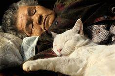 Amazon.com: Miyoko Ihara: Misao the Big Mama and Fukumaru the Cat (Japanese Edition) (9784898153192): Miyoko Ihara: Books