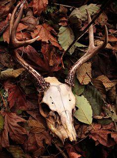 deer skull is soo KORPIKLANNI.