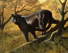 "Amador Tanoira, ""Pantera"" óleo sobre tela, 60 x 80 cm."