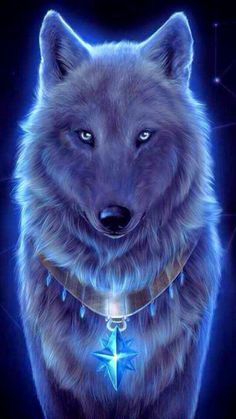 Blue, wolf, wallpaper