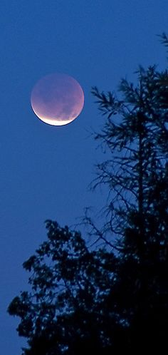 Lunar Eclipse -vertical crop -- by Kevbo Moon Photos, Moon Pictures, Luna Moon, Shoot The Moon, Sun Moon Stars, Moon Rise, Beautiful Moon, Lunar Eclipse, Night Skies