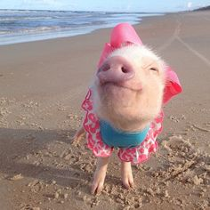 Prissy at the beach | Animals Zone